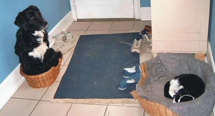 psi versus kočky zábavné vtipné nejlepší obrázky fotky fotografie fotoalbum 7