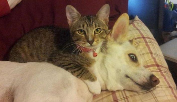 psi versus kočky zábavné vtipné nejlepší obrázky fotky fotografie fotoalbum 8