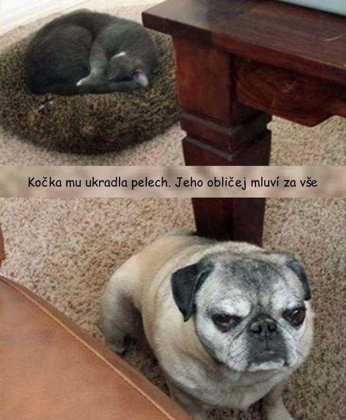 psi versus kočky zábavné vtipné nejlepší obrázky fotky fotografie fotoalbum 9