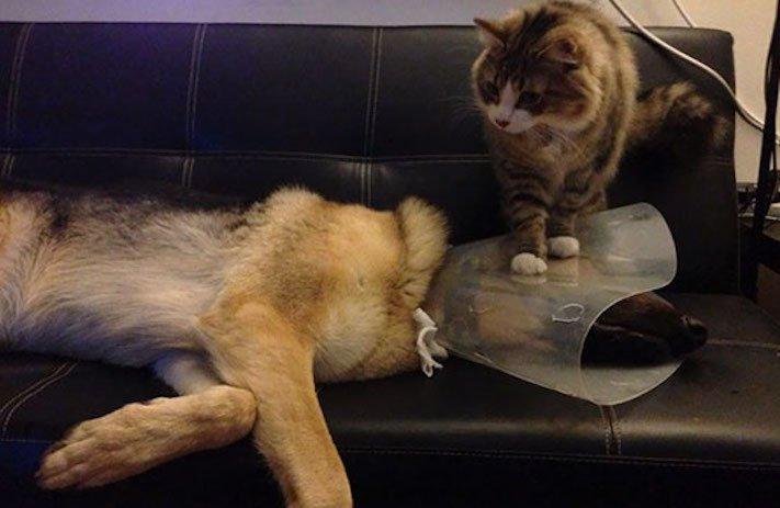 psi versus kočky zábavné vtipné nejlepší obrázky fotky fotografie fotoalbum 10