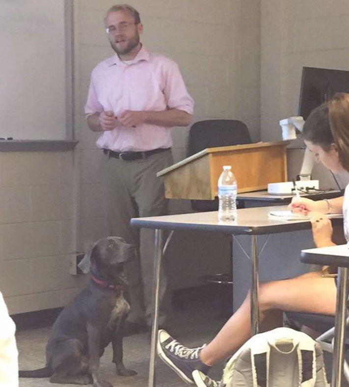 pes do školy ve škole výuka se psy se psem pes během vyučování 4