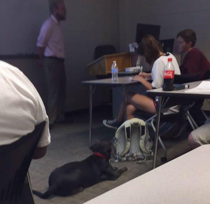 pes do školy ve škole výuka se psy se psem pes během vyučování 7