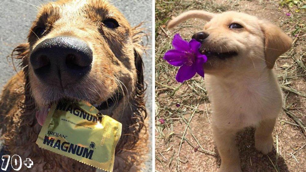 pes psi psy nosí nejneočekávanější nejméně očekávané nejvíce neočekávané dárky svým páníčkům majitelům dary dárek od psa