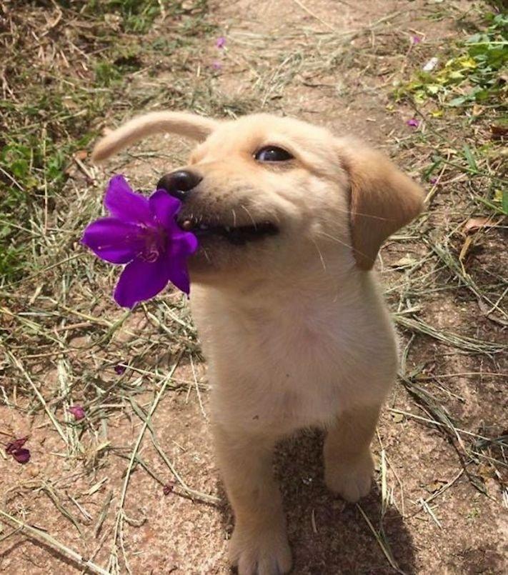 pes psi psy nosí nejneočekávanější nejméně očekávané nejvíce neočekávané dárky svým páníčkům majitelům dary dárek od psa 1