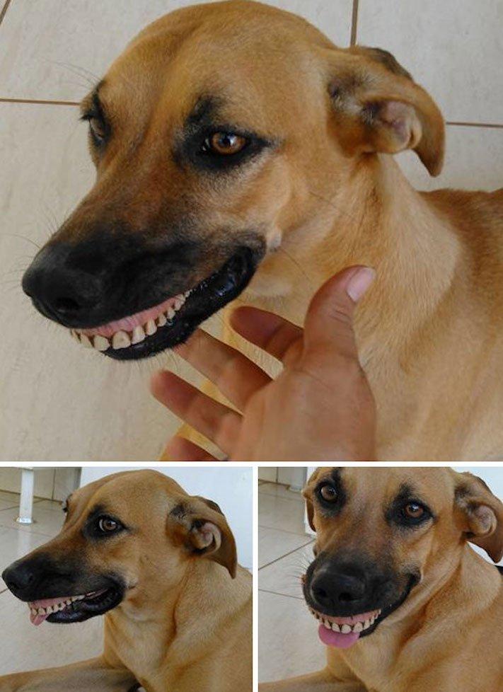 pes psi psy nosí nejneočekávanější nejméně očekávané nejvíce neočekávané dárky svým páníčkům majitelům dary dárek od psa 2