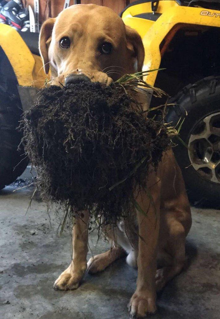 pes psi psy nosí nejneočekávanější nejméně očekávané nejvíce neočekávané dárky svým páníčkům majitelům dary dárek od psa 5