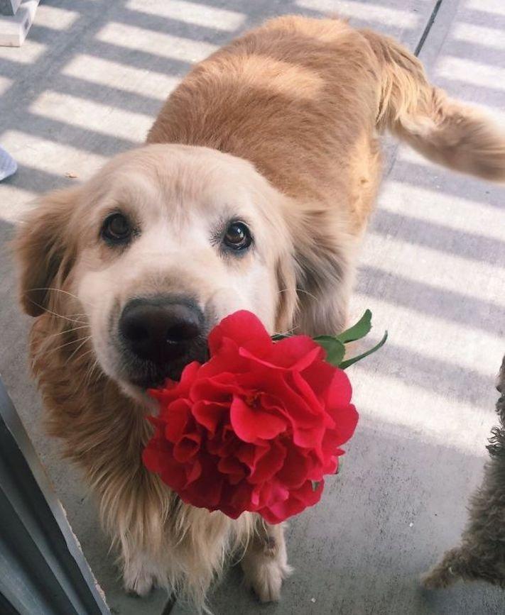 pes psi psy nosí nejneočekávanější nejméně očekávané nejvíce neočekávané dárky svým páníčkům majitelům dary dárek od psa 6