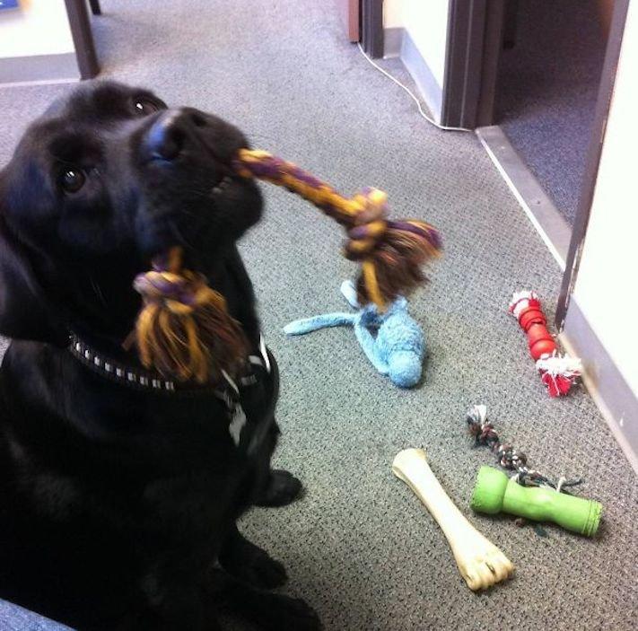 pes psi psy nosí nejneočekávanější nejméně očekávané nejvíce neočekávané dárky svým páníčkům majitelům dary dárek od psa 7