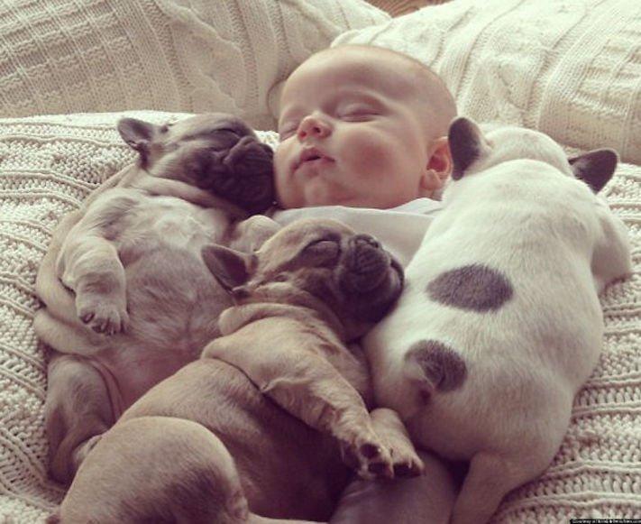 nejlepší nejroztomilejší obrázky buldočků boldoků bulldog buldog bulldok francouzský buldoček plemeno psa 3