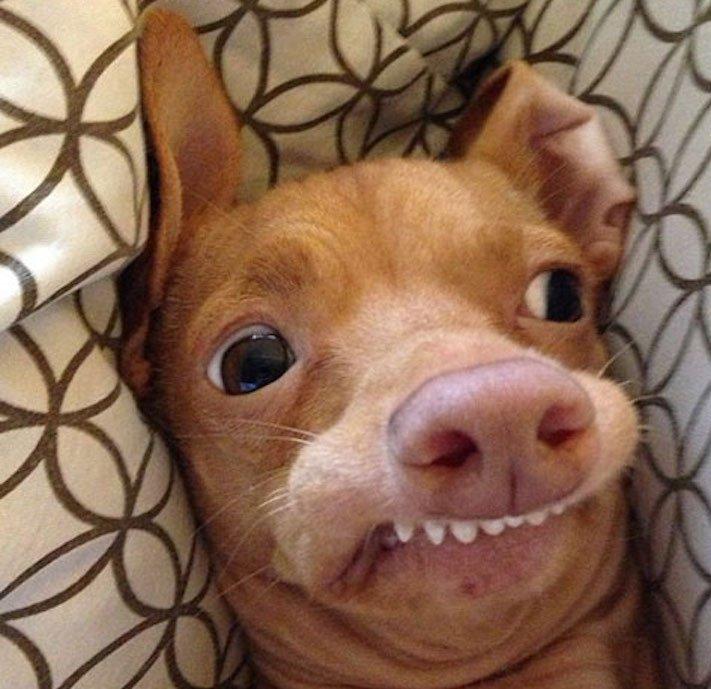 fotoalbum roztomilých psů nejroztomilejší pes na světě zábavné vtipné obrázky se psy foto série 1