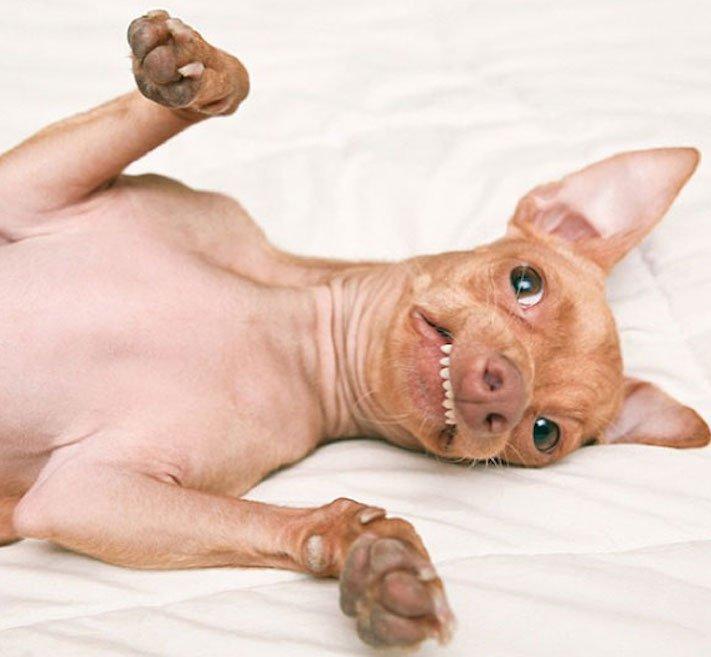 fotoalbum roztomilých psů nejroztomilejší pes na světě zábavné vtipné obrázky se psy foto série 2