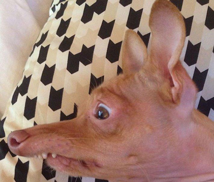 fotoalbum roztomilých psů nejroztomilejší pes na světě zábavné vtipné obrázky se psy foto série 3