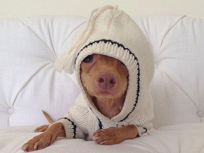fotoalbum roztomilých psů nejroztomilejší pes na světě zábavné vtipné obrázky se psy foto série 4