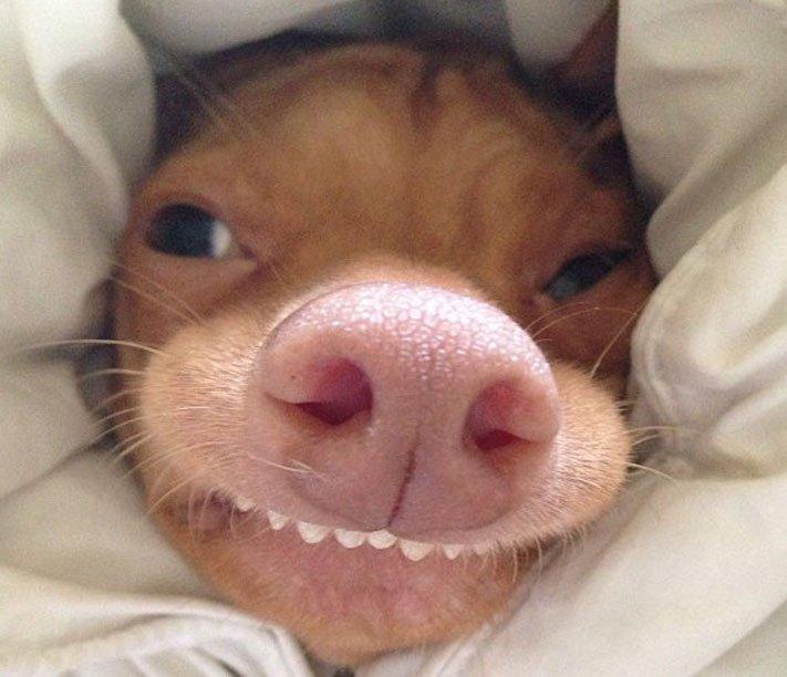 fotoalbum roztomilých psů nejroztomilejší pes na světě zábavné vtipné obrázky se psy foto série 5
