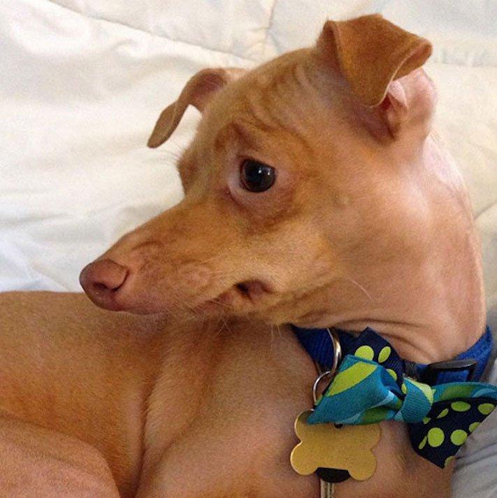 fotoalbum roztomilých psů nejroztomilejší pes na světě zábavné vtipné obrázky se psy foto série 5a