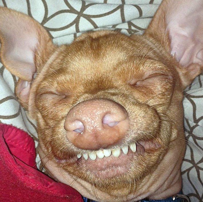 fotoalbum roztomilých psů nejroztomilejší pes na světě zábavné vtipné obrázky se psy foto série 6