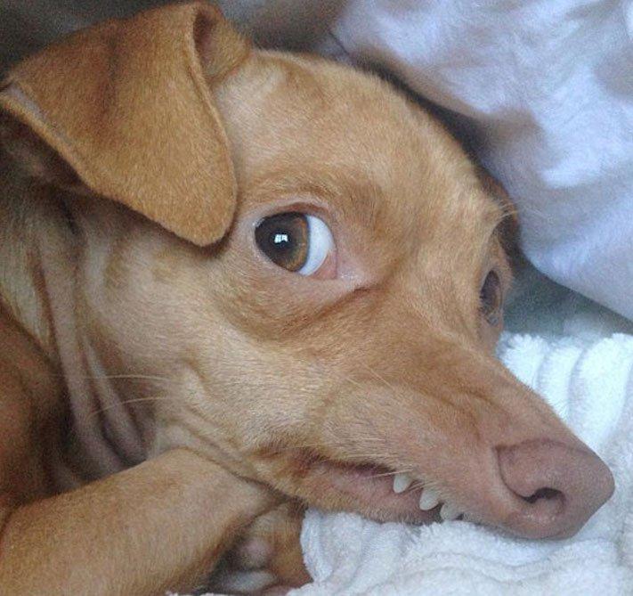 fotoalbum roztomilých psů nejroztomilejší pes na světě zábavné vtipné obrázky se psy foto série 6a
