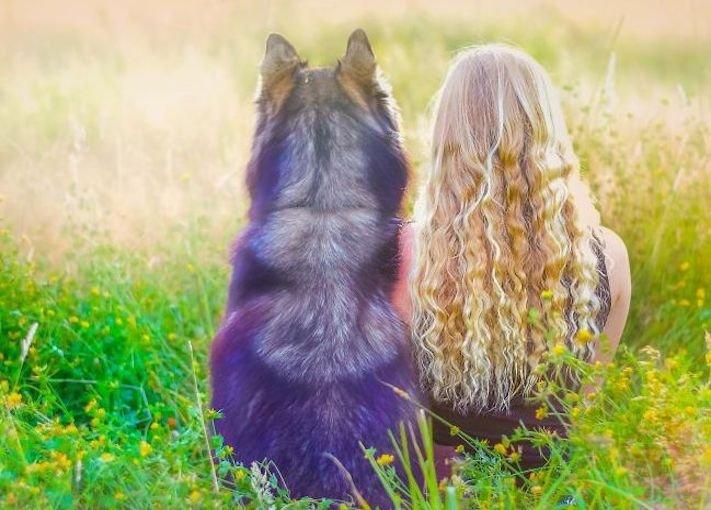 husky, sibiřský husky, psí plemeno, psí, plemeno, psa, obrázky, štěněte, štěně, huskyho, huski, hasky, haski, plemeno, psa obrázky, fotoalbum, video, modré, oči, u psa 7