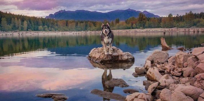 husky, sibiřský husky, psí plemeno, psí, plemeno, psa, obrázky, štěněte, štěně, huskyho, huski, hasky, haski, plemeno, psa obrázky, fotoalbum, video, modré, oči, u psa 11