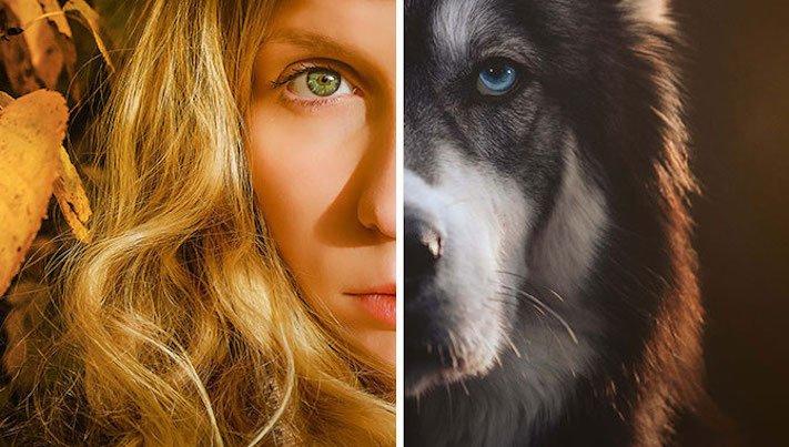 husky, sibiřský husky, psí plemeno, psí, plemeno, psa, obrázky, štěněte, štěně, huskyho, huski, hasky, haski, plemeno, psa obrázky, fotoalbum, video, modré, oči, u psa 12