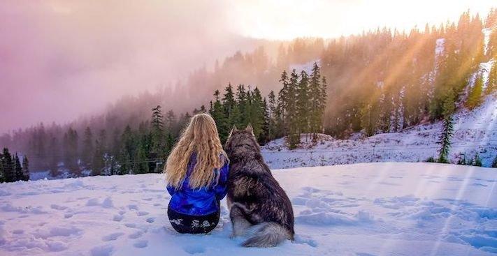 husky, sibiřský husky, psí plemeno, psí, plemeno, psa, obrázky, štěněte, štěně, huskyho, huski, hasky, haski, plemeno, psa obrázky, fotoalbum, video, modré, oči, u psa 15