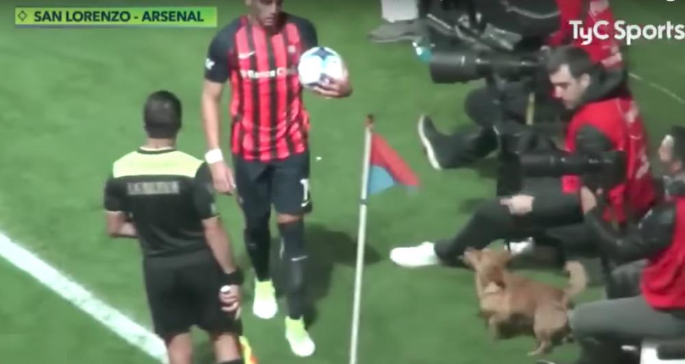 pes na fotbalovém zápase narušuje utkání