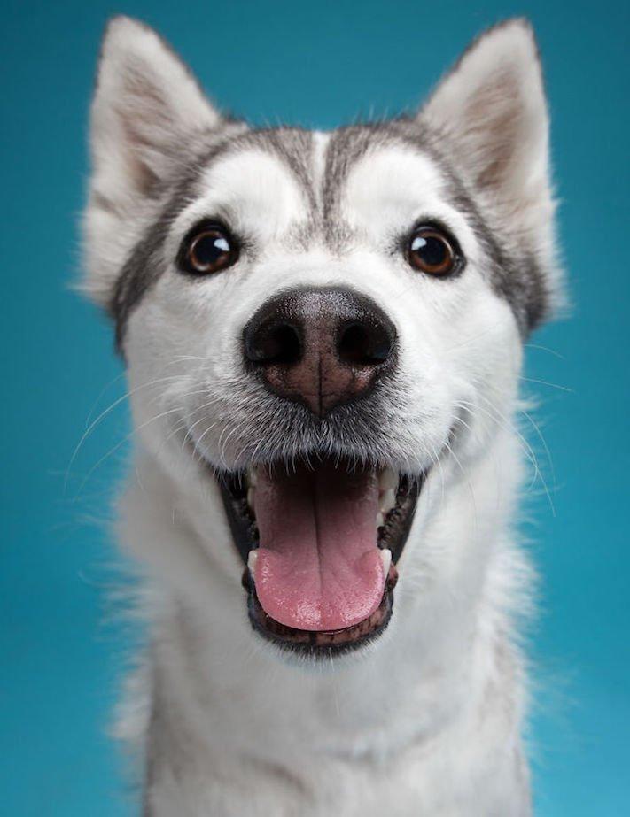 psí osobnost, psa, obrázky, psů, jako, lidí, porovnání, vlastností, pohled, mimika, tvář, maska, psa, výrazy, psů 1