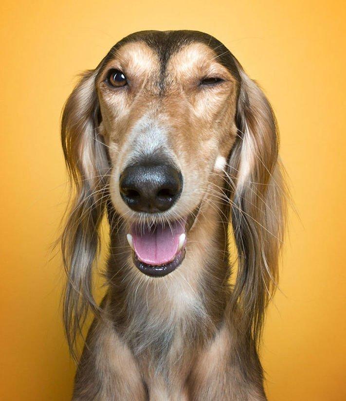 psí osobnost, psa, obrázky, psů, jako, lidí, porovnání, vlastností, pohled, mimika, tvář, maska, psa, výrazy, psů 2