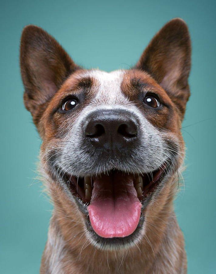 psí osobnost, psa, obrázky, psů, jako, lidí, porovnání, vlastností, pohled, mimika, tvář, maska, psa, výrazy, psů 4