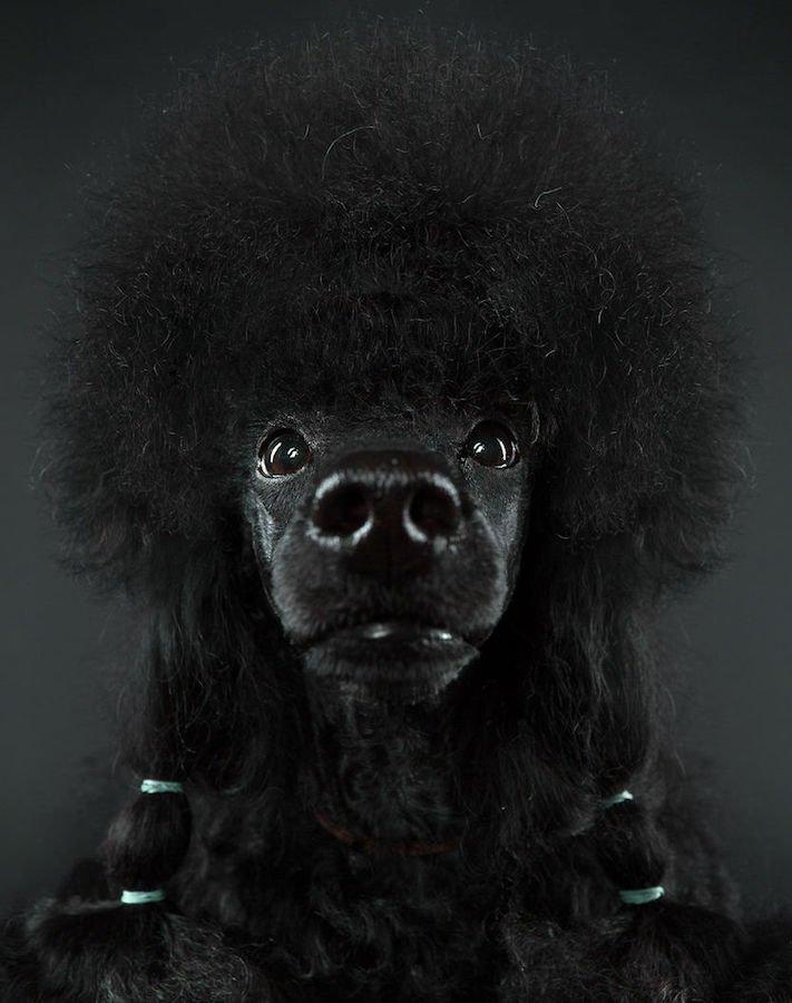 psí osobnost, psa, obrázky, psů, jako, lidí, porovnání, vlastností, pohled, mimika, tvář, maska, psa, výrazy, psů 6