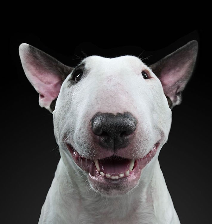 psí osobnost, psa, obrázky, psů, jako, lidí, porovnání, vlastností, pohled, mimika, tvář, maska, psa, výrazy, psů 7