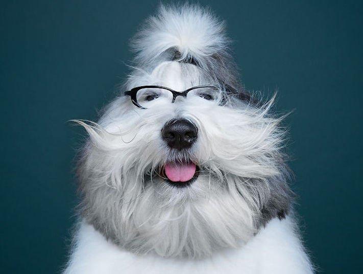 psí osobnost, psa, obrázky, psů, jako, lidí, porovnání, vlastností, pohled, mimika, tvář, maska, psa, výrazy, psů 8