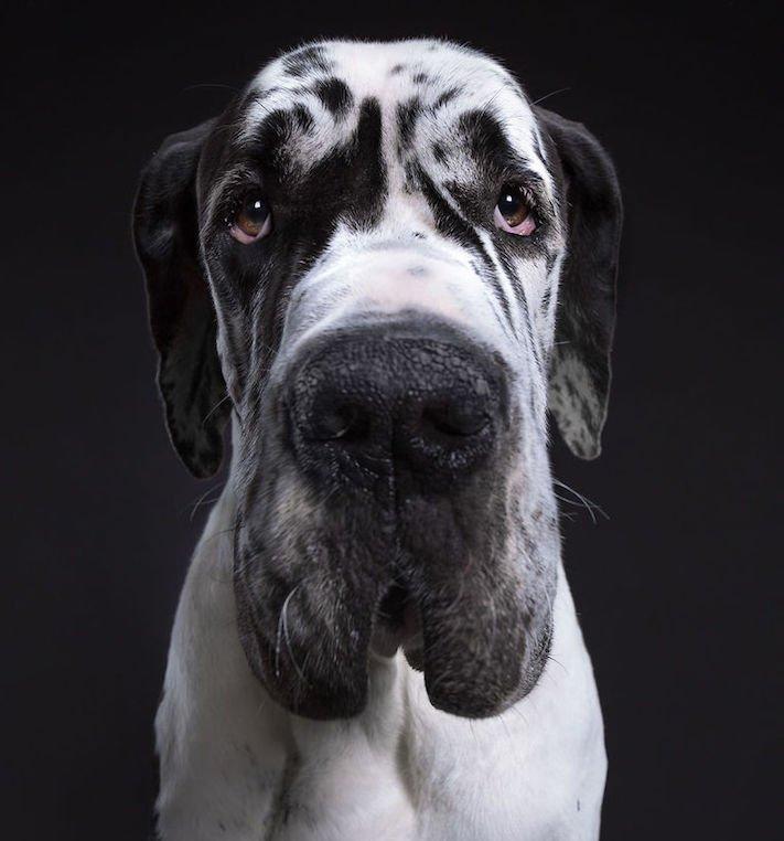 psí osobnost, psa, obrázky, psů, jako, lidí, porovnání, vlastností, pohled, mimika, tvář, maska, psa, výrazy, psů 9