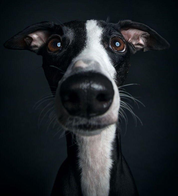 psí osobnost, psa, obrázky, psů, jako, lidí, porovnání, vlastností, pohled, mimika, tvář, maska, psa, výrazy, psů 10