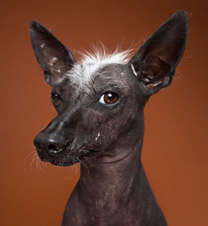 psí osobnost, psa, obrázky, psů, jako, lidí, porovnání, vlastností, pohled, mimika, tvář, maska, psa, výrazy, psů 11