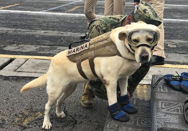 záchranáři, psí, pes, záchranář, vyhledání, vyhledávání, osob, přeživších, obětí, katastrofy, povodní, zemětřesení ochranné, pomůcky, pro, psa 1