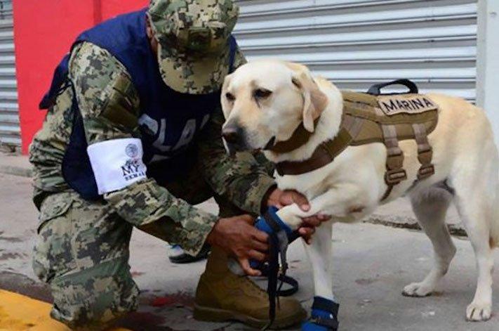 záchranáři, psí, pes, záchranář, vyhledání, vyhledávání, osob, přeživších, obětí, katastrofy, povodní, zemětřesení ochranné, pomůcky, pro, psa 2