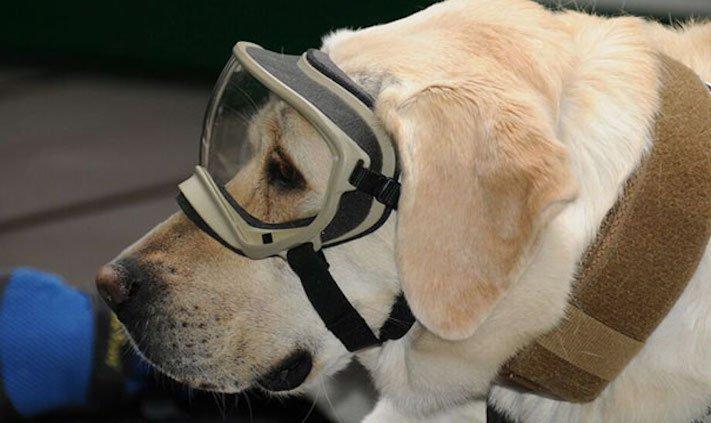 záchranáři, psí, pes, záchranář, vyhledání, vyhledávání, osob, přeživších, obětí, katastrofy, povodní, zemětřesení ochranné, pomůcky, pro, psa 4