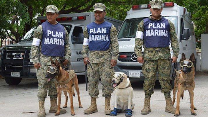 záchranáři, psí, pes, záchranář, vyhledání, vyhledávání, osob, přeživších, obětí, katastrofy, povodní, zemětřesení ochranné, pomůcky, pro, psa 6