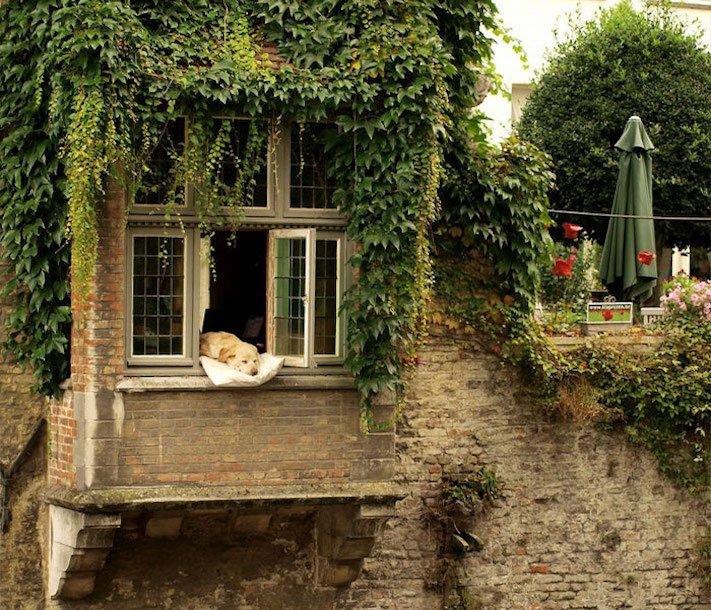 pes, psi, kteří se mají, lépe, než lidé, lidé, lidi, lepší, psí, život, pod, psa, pod psa, fotoalbum, obrázky, psů, vtipné, zábavné 1