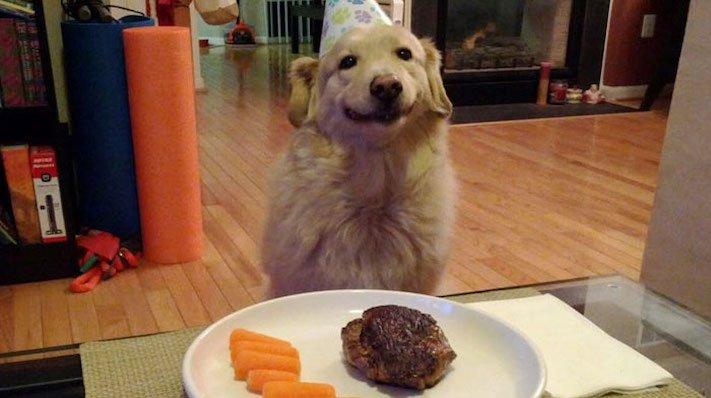pes, psi, kteří se mají, lépe, než lidé, lidé, lidi, lepší, psí, život, pod, psa, pod psa, fotoalbum, obrázky, psů, vtipné, zábavné 3