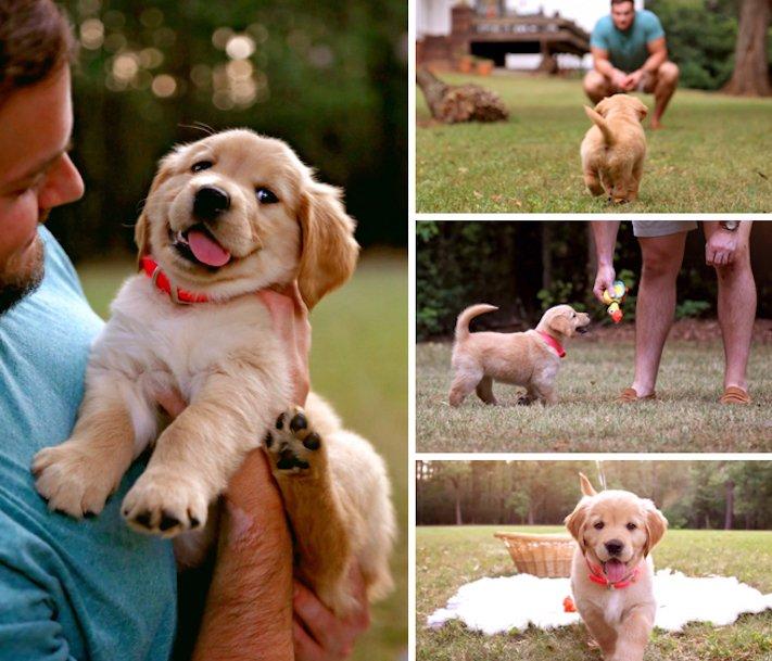 pes, psi, kteří se mají, lépe, než lidé, lidé, lidi, lepší, psí, život, pod, psa, pod psa, fotoalbum, obrázky, psů, vtipné, zábavné 5