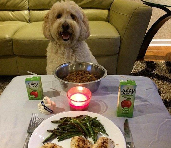 pes, psi, kteří se mají, lépe, než lidé, lidé, lidi, lepší, psí, život, pod, psa, pod psa, fotoalbum, obrázky, psů, vtipné, zábavné 10