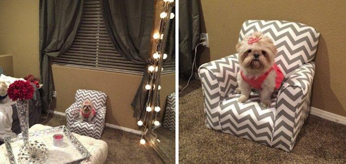 pes, psi, kteří se mají, lépe, než lidé, lidé, lidi, lepší, psí, život, pod, psa, pod psa, fotoalbum, obrázky, psů, vtipné, zábavné 11