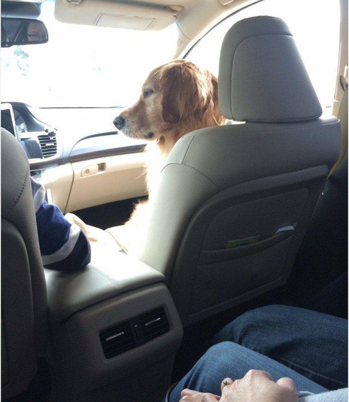 pes, psi, kteří se mají, lépe, než lidé, lidé, lidi, lepší, psí, život, pod, psa, pod psa, fotoalbum, obrázky, psů, vtipné, zábavné 12