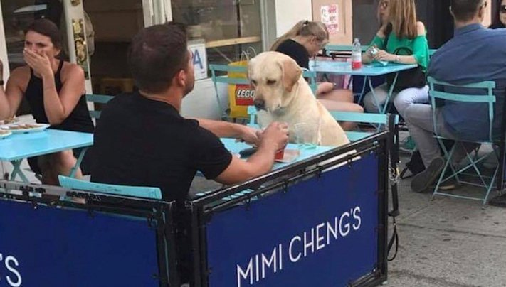 pes, psi, kteří se mají, lépe, než lidé, lidé, lidi, lepší, psí, život, pod, psa, pod psa, fotoalbum, obrázky, psů, vtipné, zábavné 13