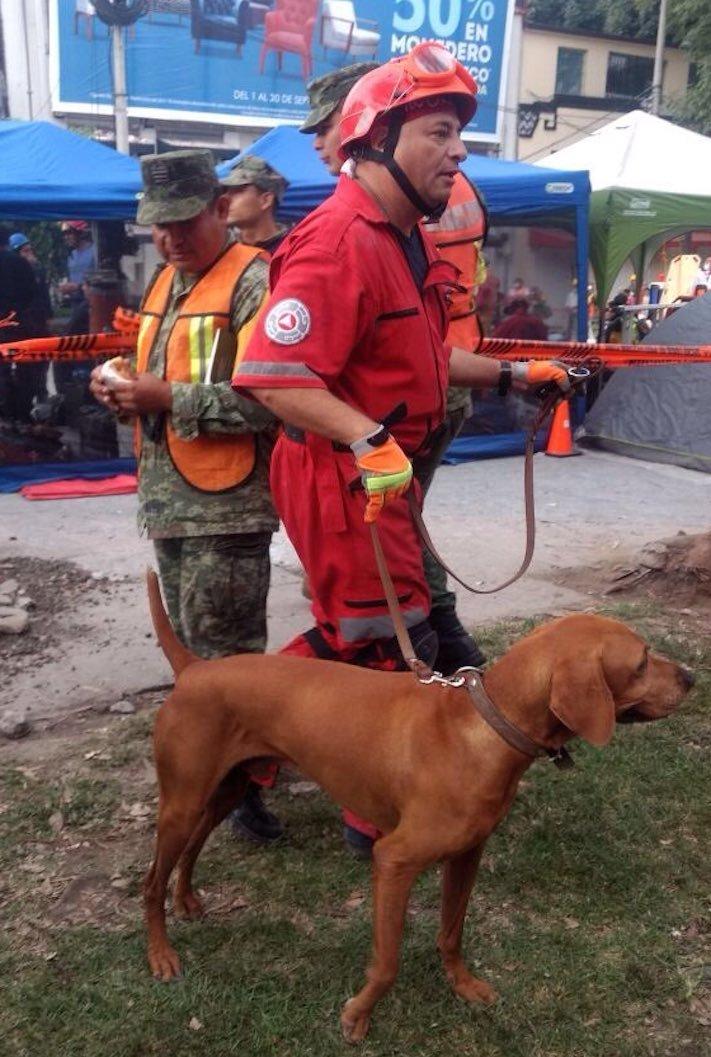 záchrana psa po zěmětřesení zlatý retrívr 2