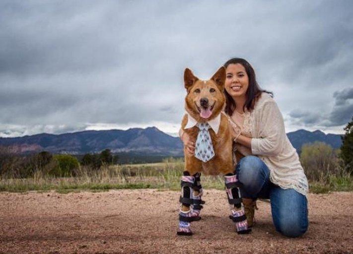 protéza, protézy, u psa, psovi, pes, bez nohou, bez končetin, končetiny, tlapky, postižený pes 3