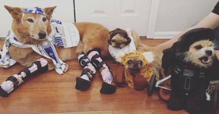protéza, protézy, u psa, psovi, pes, bez nohou, bez končetin, končetiny, tlapky, postižený pes 7
