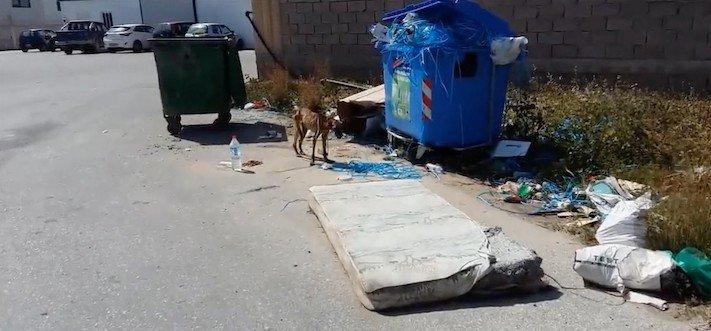 psí, příběhy, psa, pomoc, psům, na ulici, pouliční, psi, záchrany, psů, obrázky, video 1